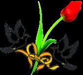 Floristeria Tulipan